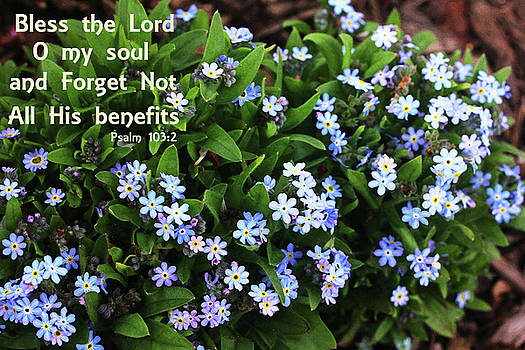 Forget not All His Benefits by Trina Ansel
