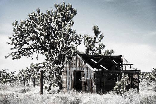 Forgotten by Nancy Killam