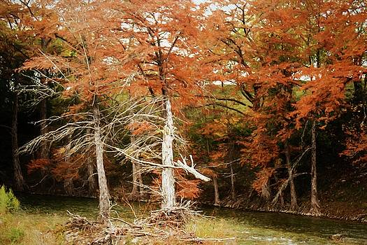 Forked Cypress-Fall colors by Fritz Ozuna