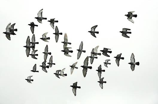 Formation by Hans Kool