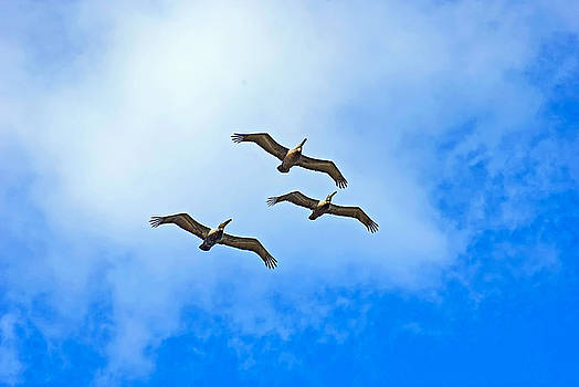 Formation by Robert Brown