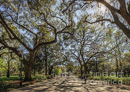 Forsyth Park by Joan McCool