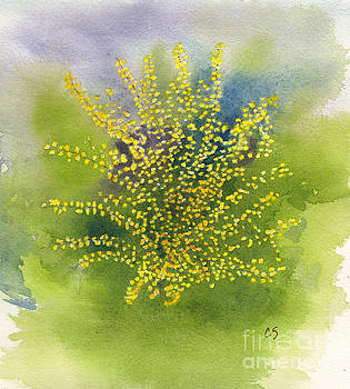 Forsythia Study 1 in Watercolor by Conni Schaftenaar