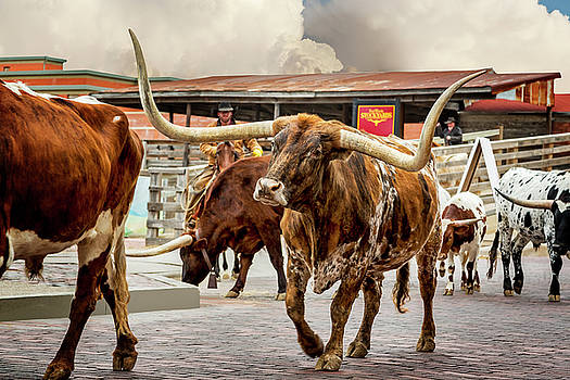 Fort Worth Cattle Drive by Kelley King