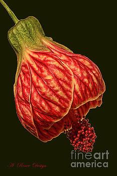 Fortunes Flowering Maple by Renee Marie Martinez