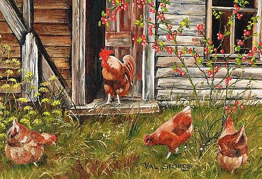 Fossicking fowls by Val Stokes