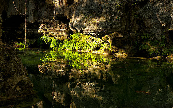 Fossil Reflecting Pool by Katherine Worley