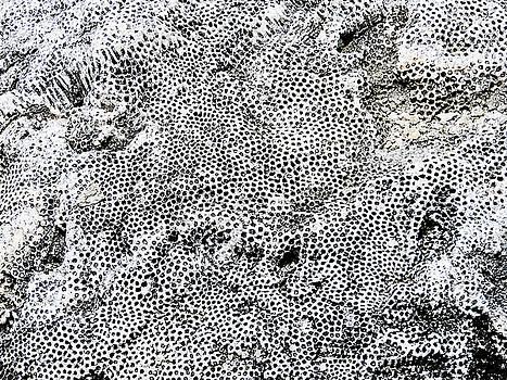 Fossil Rock Abstract 12 by Bob Slitzan