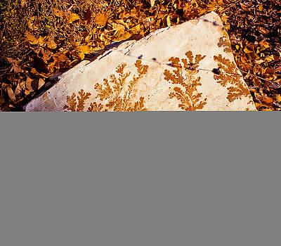 Fossil Rock by Jesska Hoff