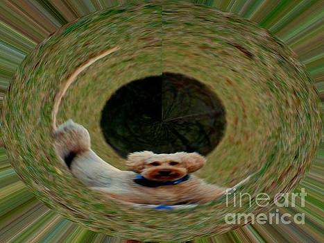 Foulon's Dog by Kelly Awad