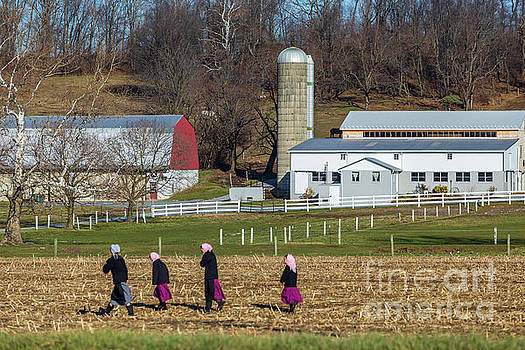 Four Amish Women in Field by George Sheldon