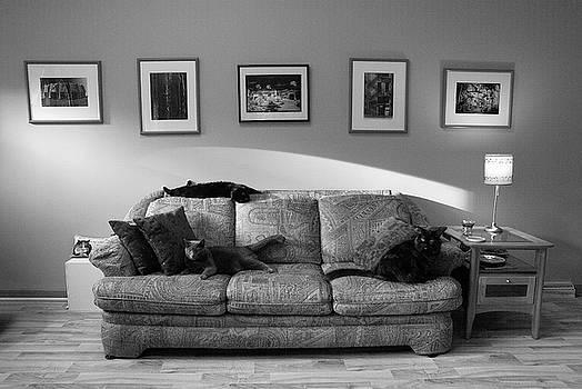 Four Cats by Dick Pratt