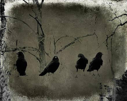 Four Crows In A Row by Gothicrow Images