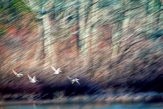 The Takeoff by J Michael Nettik