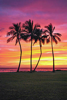 Four Palms by Megan Martens