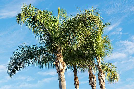Robert VanDerWal - Four Palms