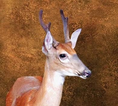 Joe Duket - Four Point Buck in Velvet