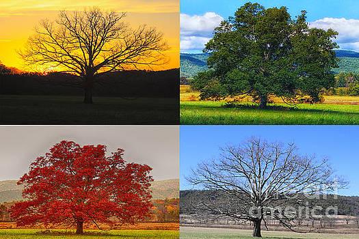 Four Seasons by Geraldine DeBoer