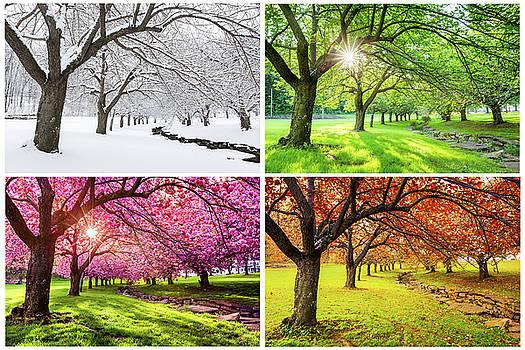 Four Seasons by Mihai Andritoiu
