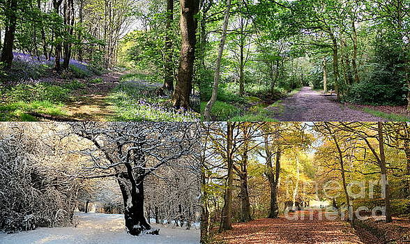 Four Seasons Woodland by John Chatterley
