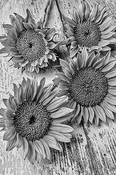Four Summer Sunflowers by Garry Gay