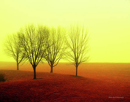 Four Trees by Coleman Mattingly