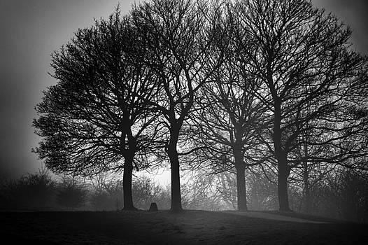 Four Trees by Wendy Chapman