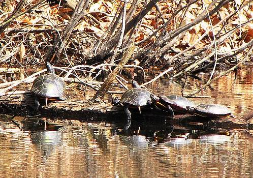 Four Turtles by Melissa Stoudt
