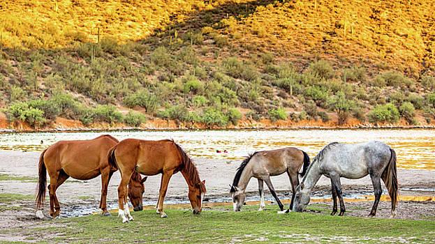 Four Wild Horses Grazing Along Arizona River by Susan Schmitz