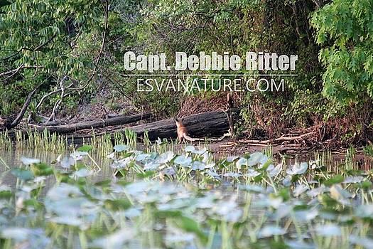 Fox 0311 by Captain Debbie Ritter
