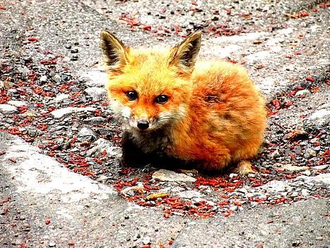Fox by Amy Sorrell