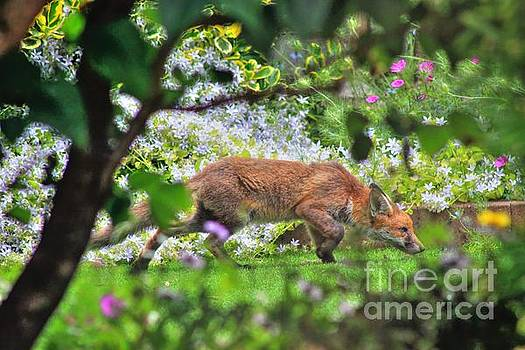 Fox Cub by Vicki Spindler