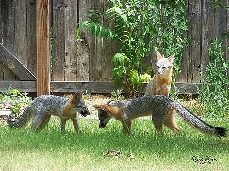 Fox Family by Deleas Kilgore