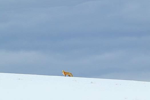 Fox on a Hill by Ann Sullivan