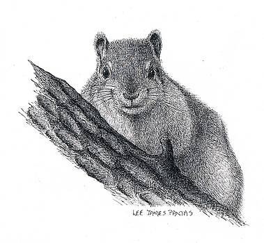 Lee Pantas - Fox Squirrel