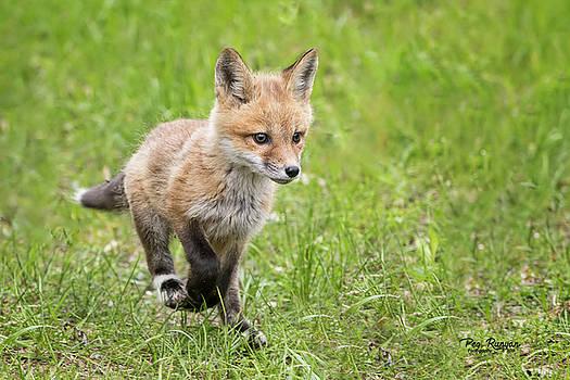 Fox Trot by Peg Runyan