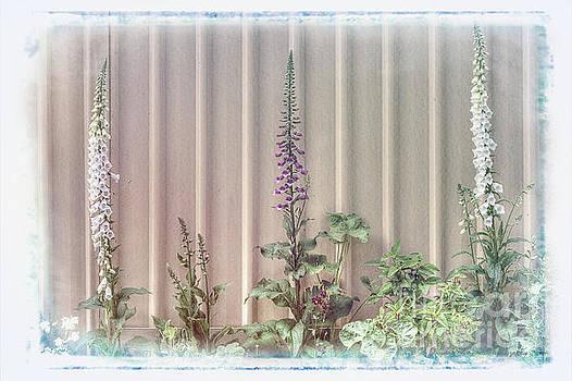 Foxgloves by Elaine Teague