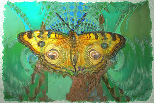Fractal Butterfly by Richard Nickson
