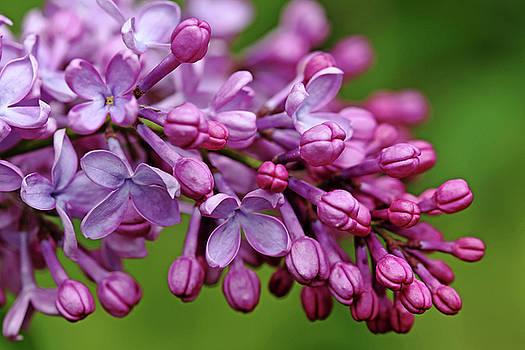 Debbie Oppermann - Fragrance Of Spring