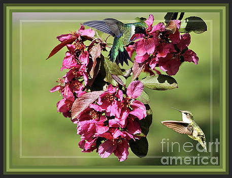 Sandra Huston - Framed Hummingbirds And Crabapple Blossoms