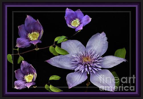 Sandra Huston - Framed Purple Clematis