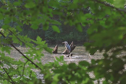Framing the heron by Asbed Iskedjian