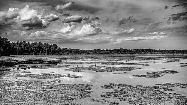 Louis Dallara - Franklin Parker Preserve - Chadsworth Landscape