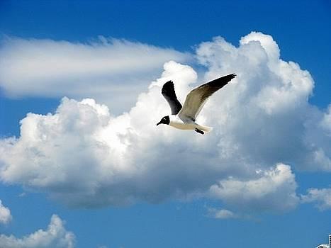 Free Bird by Mary Herring