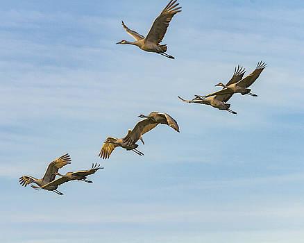 Jack R Perry - Free Flight