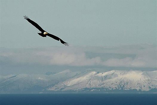 Rick  Monyahan - FREE FLIGHT