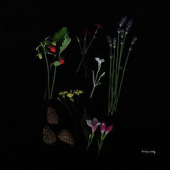 Free Pleasures by Randi Grace Nilsberg