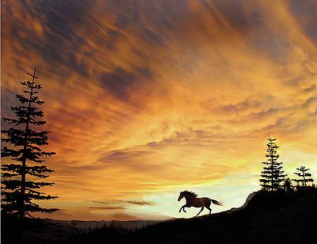 Freedom by Melinda Hughes-Berland