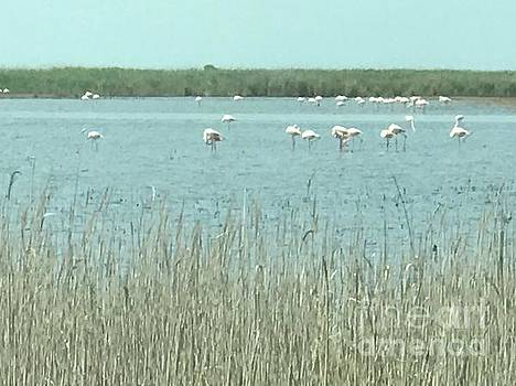 French Flamingo Reunion by Nadine Rippelmeyer