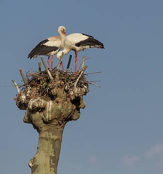 French Storks 03 by Teresa Mucha